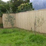 pinecore_capped_fencing_large